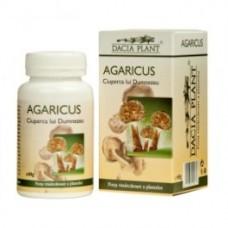 Agaricus Dacia Plant